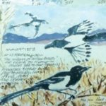 SiegelJude_Magpies_Cropped